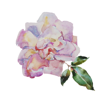 painted image: watercolor pale pink rose with leaves original illustration isolated on white background