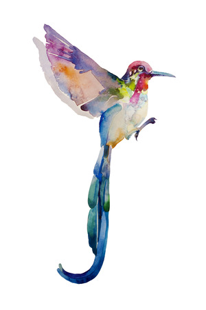 Abstract watercolor painting of pink and blue flying humming bird isolated on white background