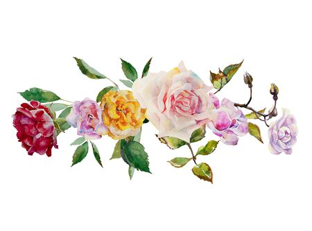 Watercolor roses horizontal blossom garland from pink, red, purple and yellow flowers and plant leaves on white gackground