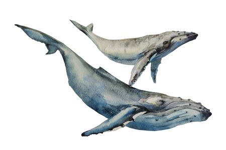 Whales big humpback with baby cub whale diving in the ocean watercolor art illustration on white background