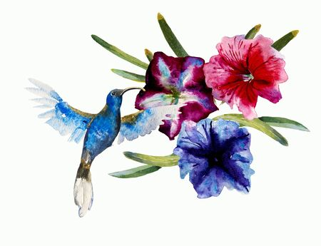 Blue small flying humming bird violet Sabrewing fly into the blue and purple petuny flowers. Abstract watercolor illustration isolated on white background