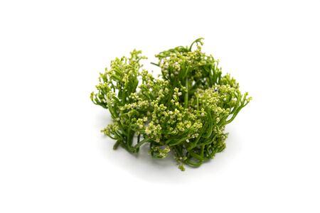 ceylon: Ceylon spinach Basella alba L. on white background Stock Photo