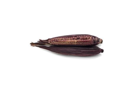zea mays: Purple waxy corn or Zea Mays Ceratina on white background Stock Photo