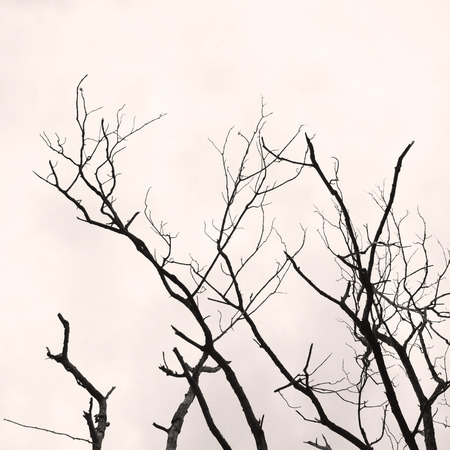 without: Tree branch without any leaves in black and white