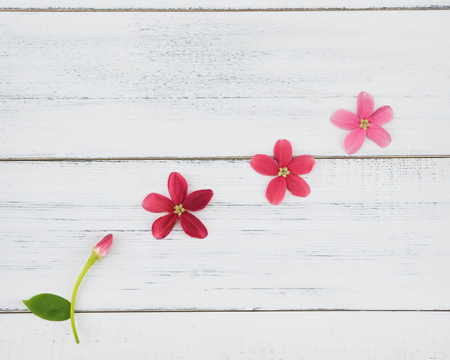 Blooming and budding flowers on white wood background