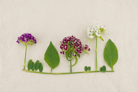 Small forest made from green leaves and sweet william flowers on muslin fabric background