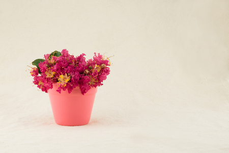 Crape myrtle flowers bouquet in pink pot with copy space