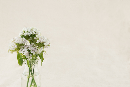 White sweet william flowers in vase with copy space