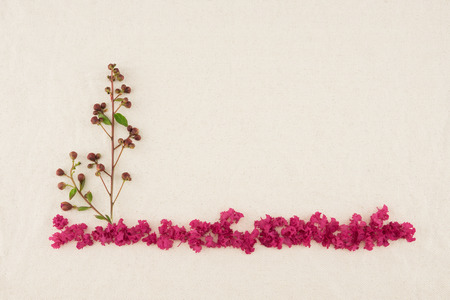 myrtle green: Budding flowers and pink petal of crape myrtle on muslin fabric with copy space. Fall forest Stock Photo