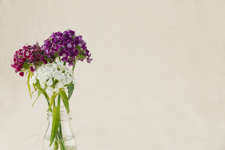 Colorful sweet william flowers bouquet in vase with copy space Stock Photo
