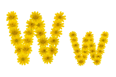 Letter W, alphabet made from yellow Wedelia flowers isolated on white background Reklamní fotografie