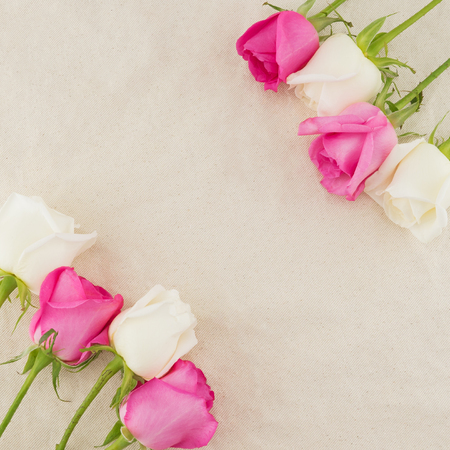 Pink and white roses on white muslin fabric with copy space Stock Photo