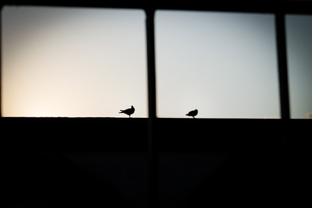 dawning: bird couple silhouette in the sun dawning background