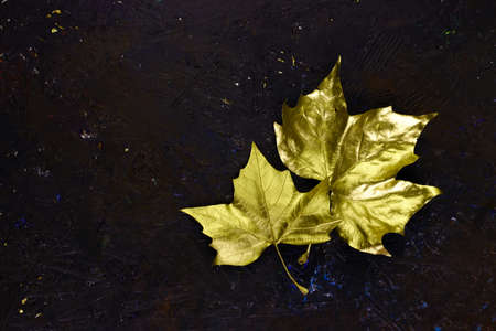 Golden leaves on dark background. 免版税图像