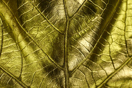 Golden background. Golden leaves close up background texture.