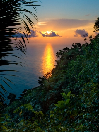 Rainforest Sunrise