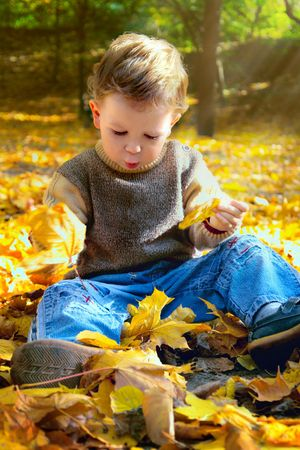 3-year-old boy playing with yellow maple leaves in the park                                photo