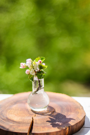 blooming apple tree small branch in water on wooden background