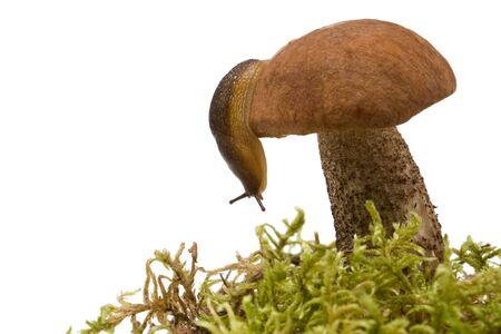 mushroom and slug isolated on white Stock Photo - 3666222
