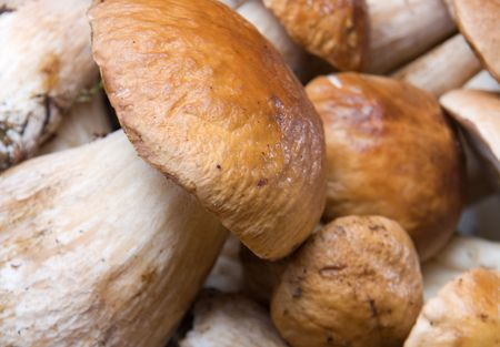 group of edible mushrooms close up photo