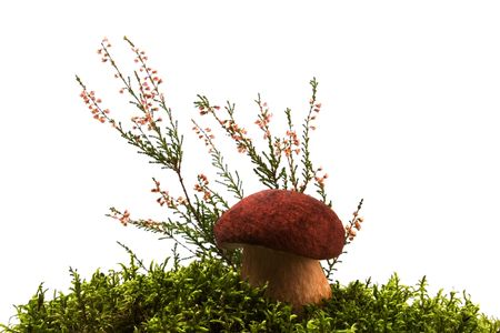 mushroom, moss and heather isolated on white photo