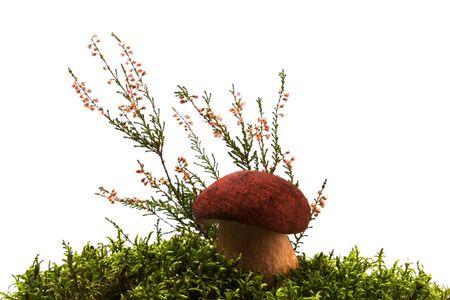 mushroom, moss and heather isolated on white Stock Photo - 3695439