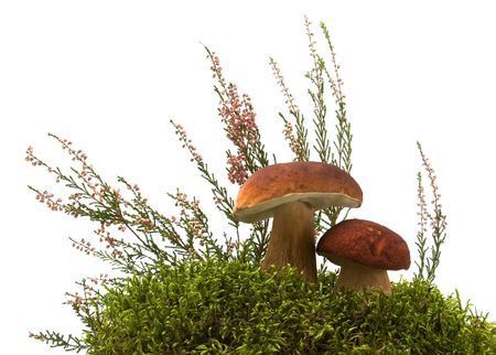 mushroom, moss and heather isolated on white Stock Photo