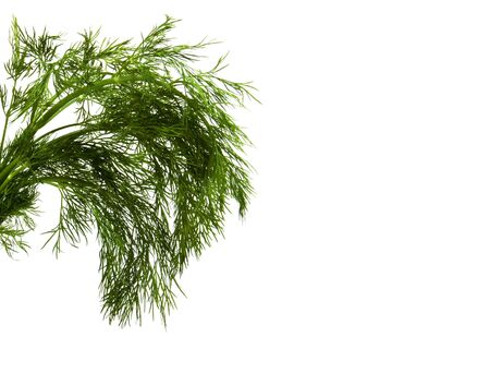 dill isolated on white photo