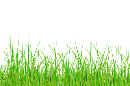 grass in vector Vector