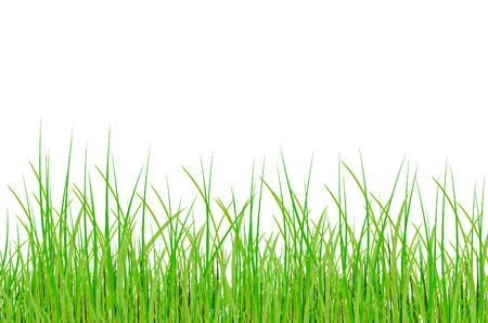 grass in vector Stock Vector - 5355312