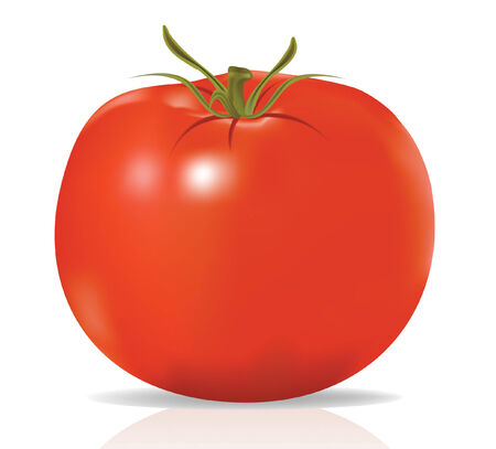 condiments: Vector, realistic tomato isolated on white background, contains gradient mesh elements