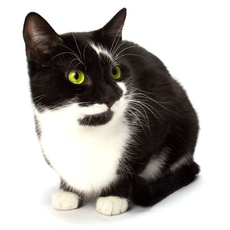 cat isolated on white background photo