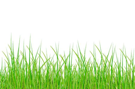 raster. grass Stock Photo - 5973597