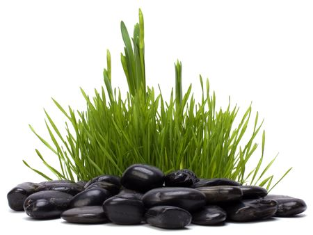 grass and stones isolated on white background photo