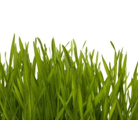 grass isolated on white background Stock Photo - 6491751