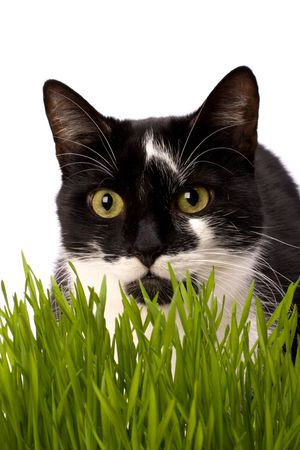 cat in grass isolated on white background Stock Photo - 6491753