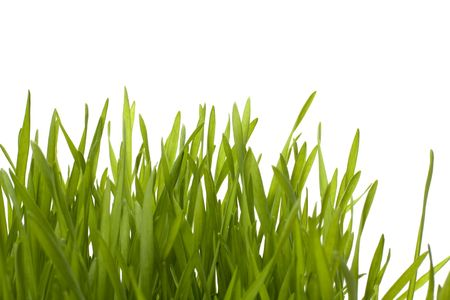 grass isolated on white background Stock Photo - 6573064