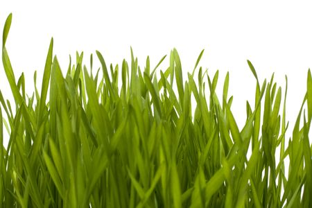 grass isolated on white background Stock Photo - 6573011