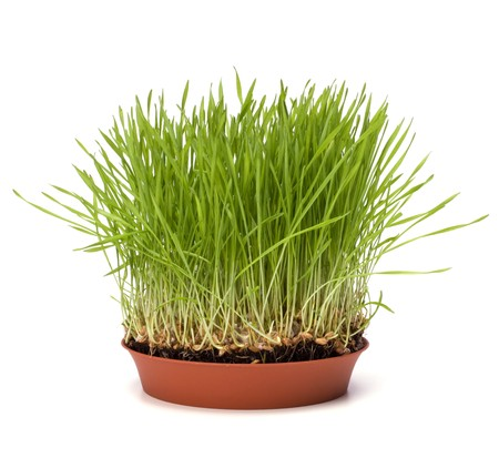 grass isolated on white background Stock Photo - 6973017