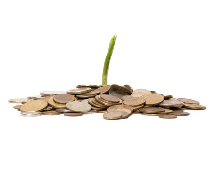 batch of euro: Money sprouts.  Business concept Stock Photo
