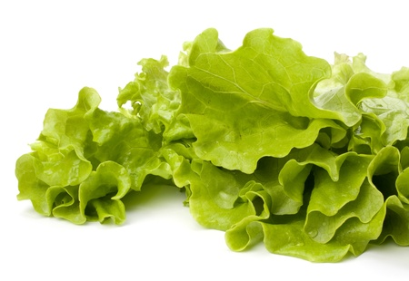 lechuga: Ensalada de lechuga aislado sobre fondo blanco