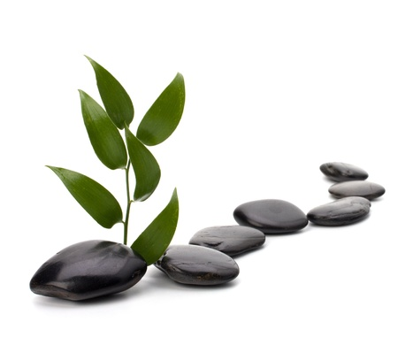 Tranquil scene. Green leaf and stones isolated on white background. Stock Photo - 8281618