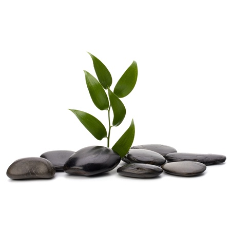 Tranquil scene. Green leaf and stones isolated on white background. photo