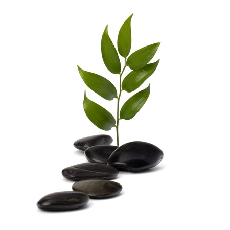 spiritual growth: Tranquil scene. Green leaf and stones isolated on white background.
