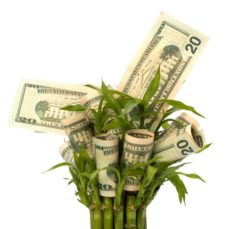 Money growing concept. Money banknotes growing  in flowerpot isolated on white background. Stock Photo - 8283258