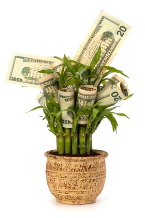 earn: Concepto creciente de dinero. Billetes de dinero crece en maceta aislado sobre fondo blanco.