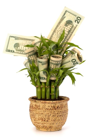 earnings: Money growing concept. Money banknotes growing  in flowerpot isolated on white background.