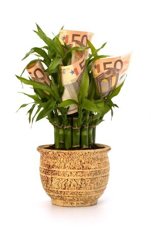 Money growing concept. Money banknotes growing  in flowerpot isolated on white background. Stock Photo - 8284415