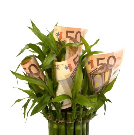 Money growing concept. Money banknotes growing  in flowerpot isolated on white background. Stock Photo - 8281746