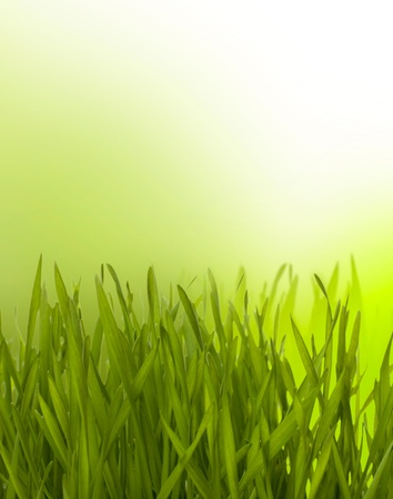 Beautiful nature background. Grass over blurred green backdrop. Stock Photo - 8285655